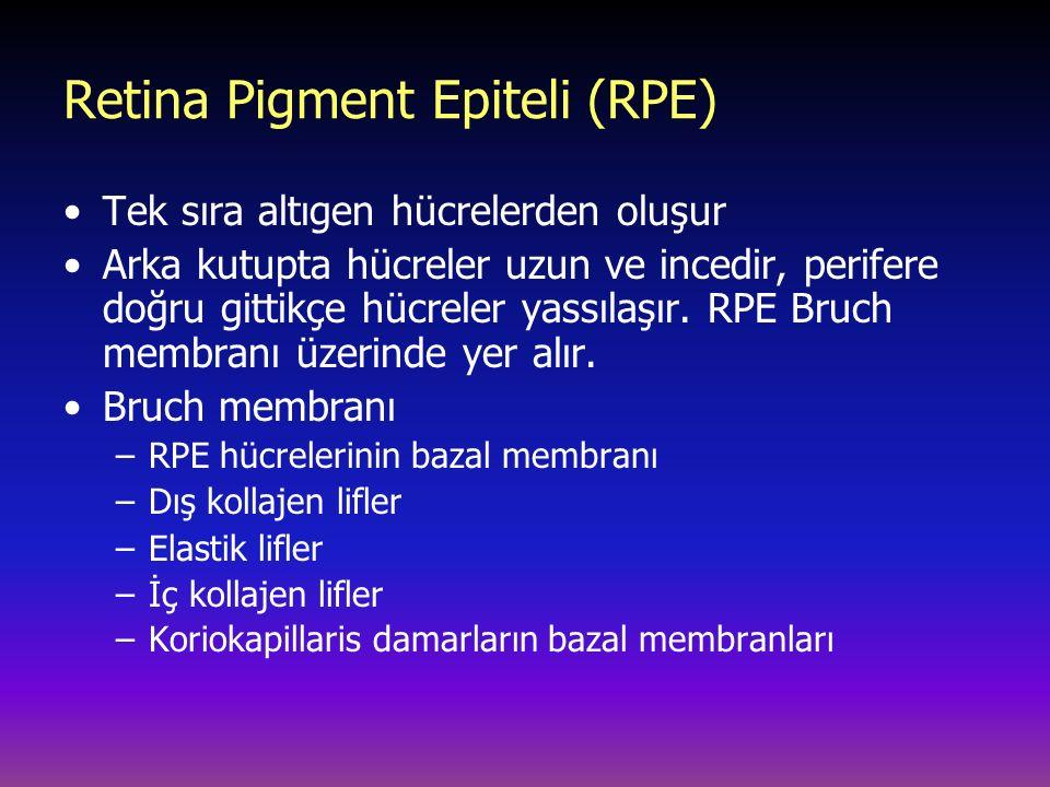 Retina Pigment Epiteli (RPE)