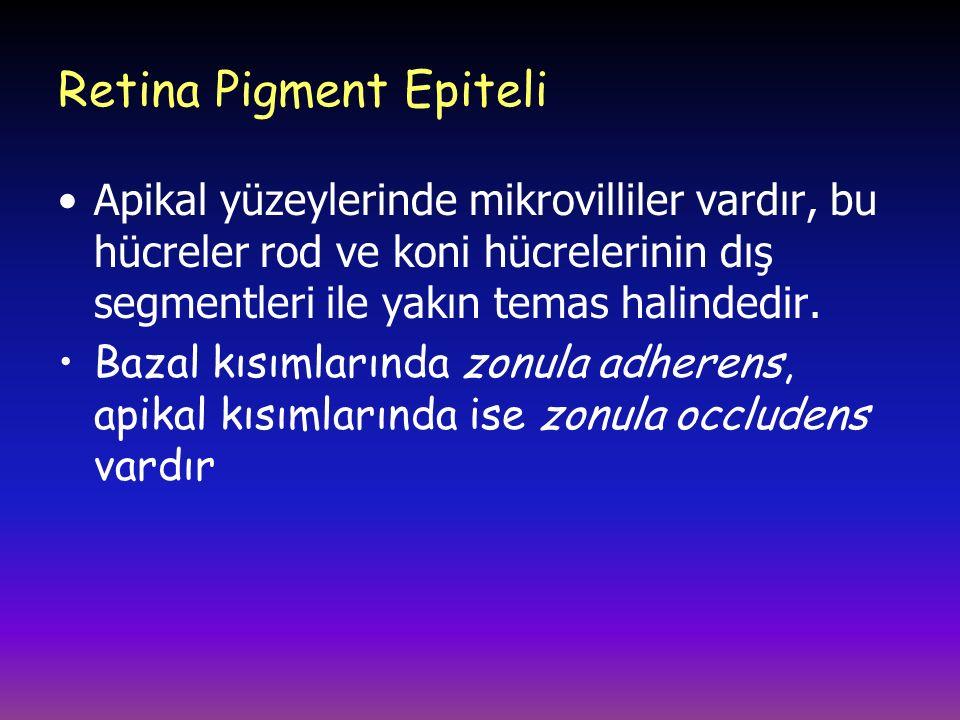 Retina Pigment Epiteli