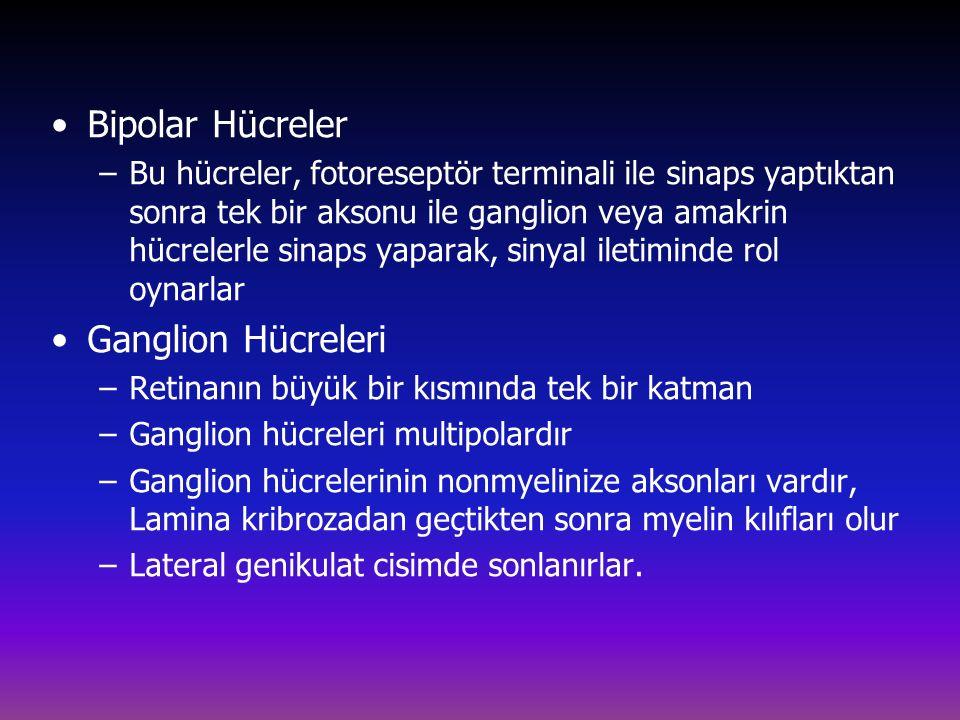 Bipolar Hücreler Ganglion Hücreleri