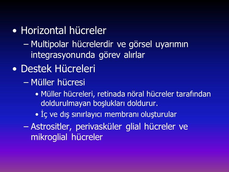 Horizontal hücreler Destek Hücreleri