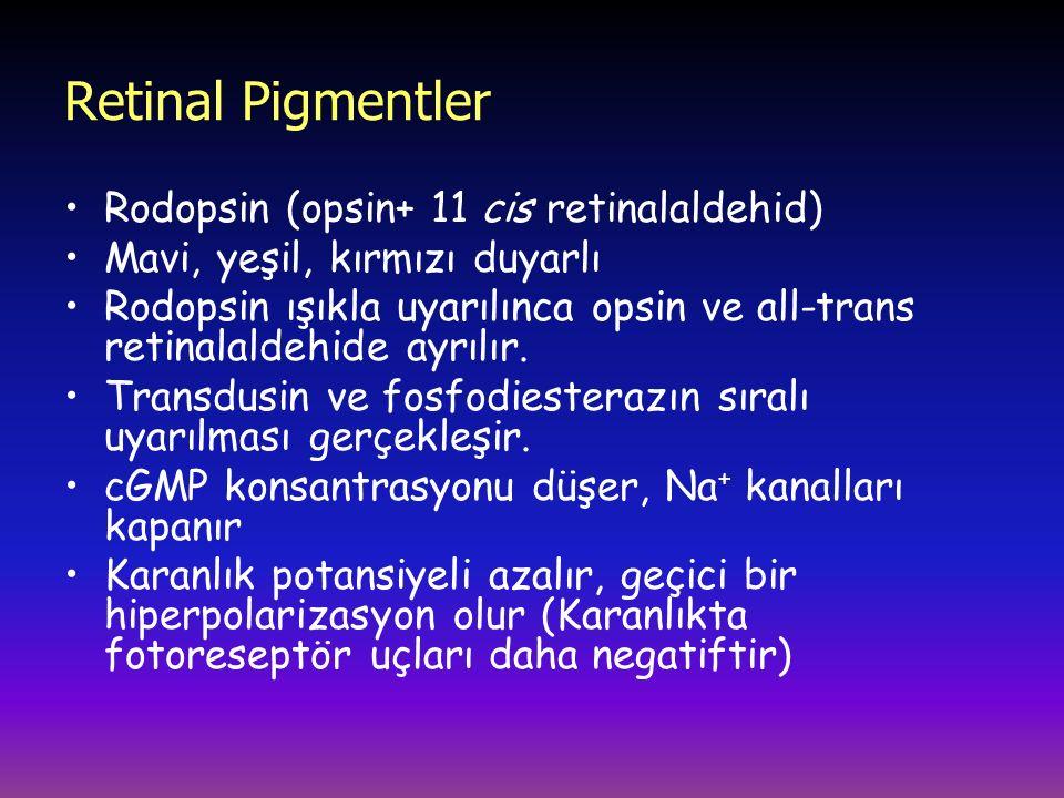 Retinal Pigmentler Rodopsin (opsin+ 11 cis retinalaldehid)