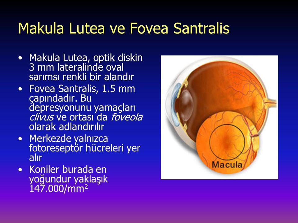 Makula Lutea ve Fovea Santralis