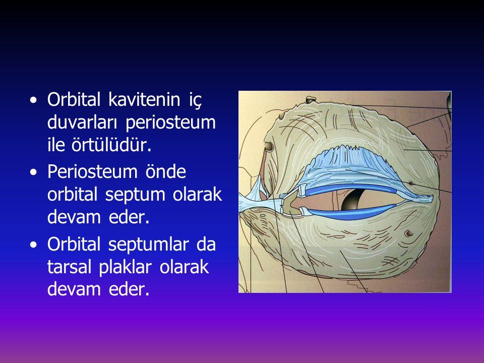 Orbital kavitenin iç duvarları periosteum ile örtülüdür.