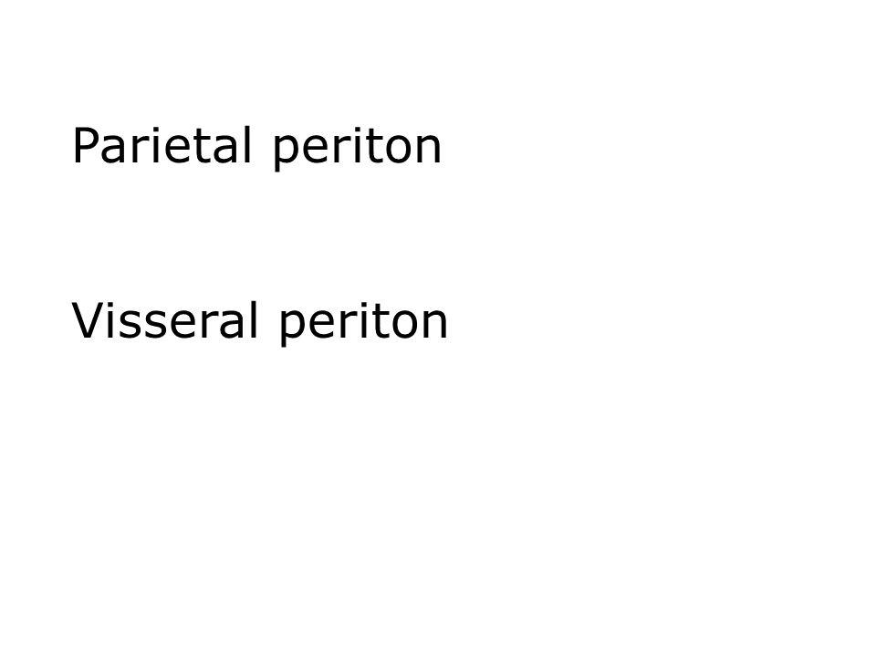 Parietal periton Visseral periton