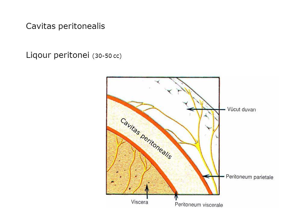 Liqour peritonei (30-50 cc)