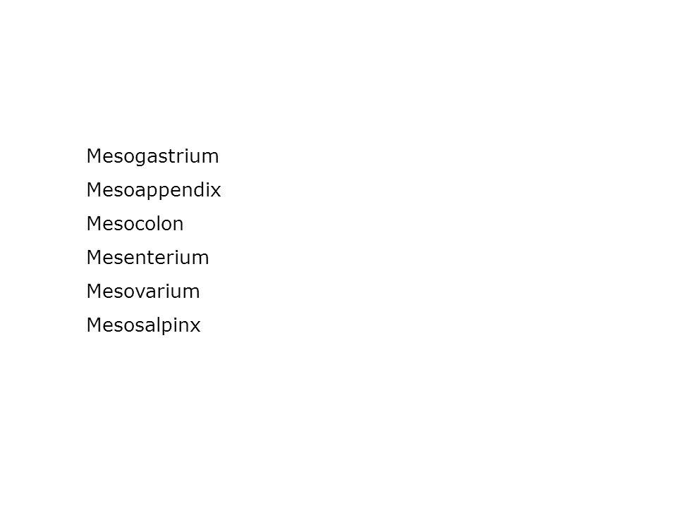 Mesogastrium Mesoappendix Mesocolon Mesenterium Mesovarium Mesosalpinx