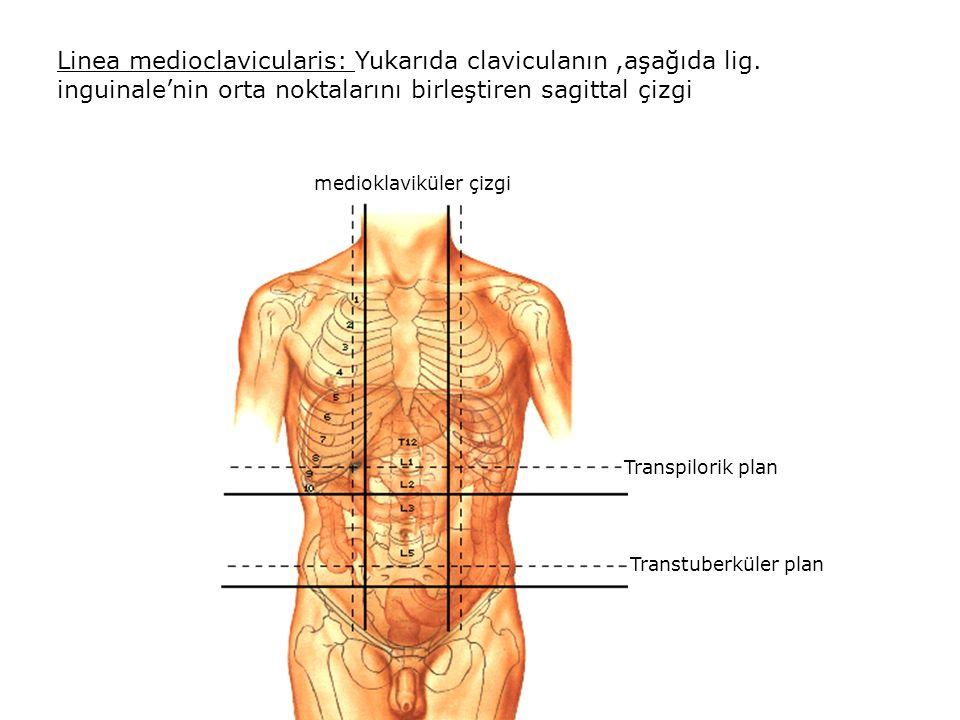 Linea medioclavicularis: Yukarıda claviculanın ,aşağıda lig