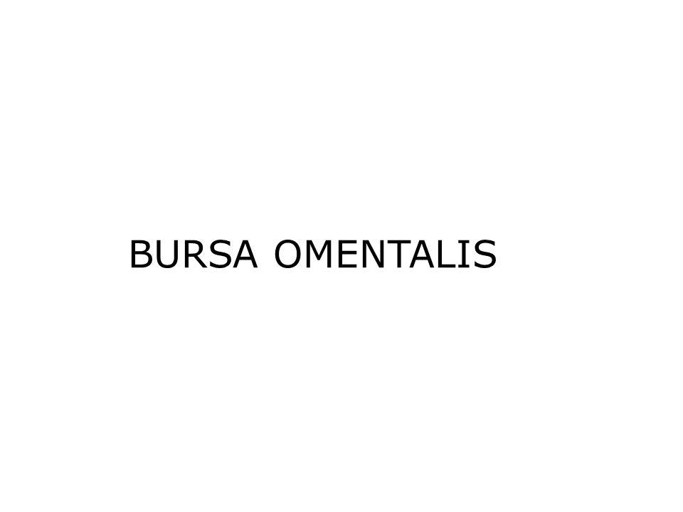 BURSA OMENTALIS