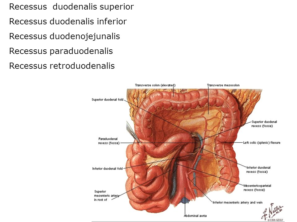 Recessus duodenalis superior
