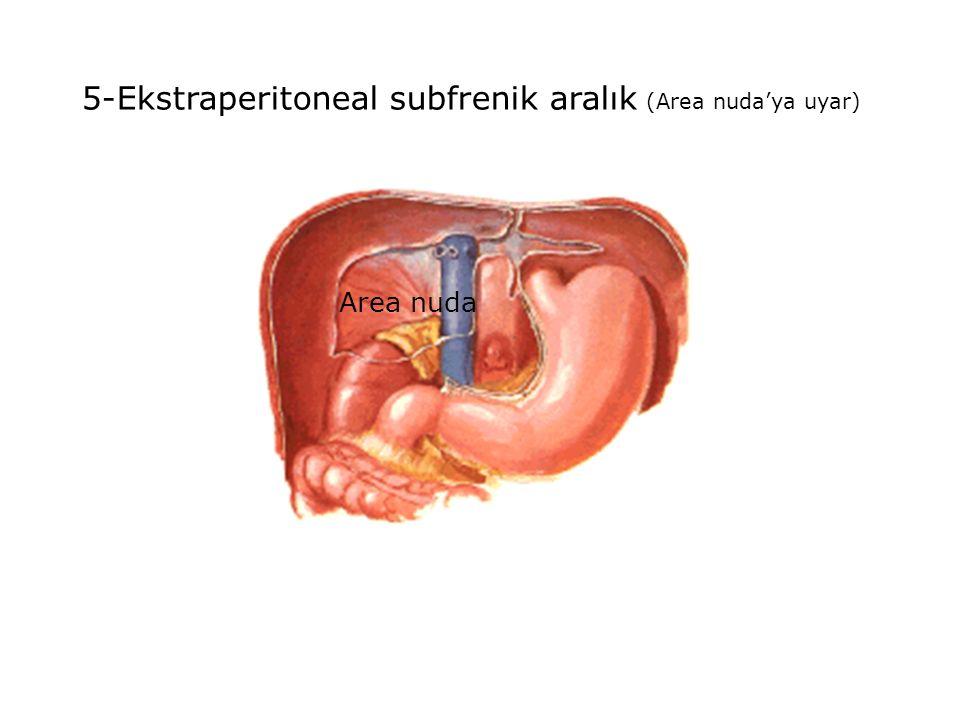 5-Ekstraperitoneal subfrenik aralık (Area nuda'ya uyar)