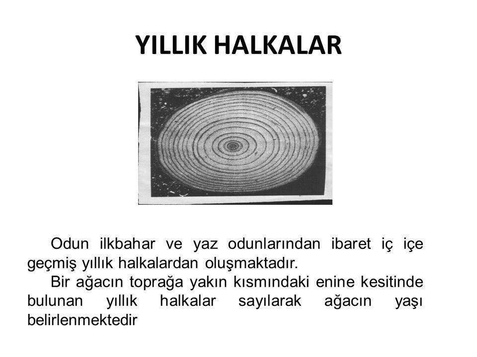 YILLIK HALKALAR Odun ilkbahar ve yaz odunlarından ibaret iç içe geçmiş yıllık halkalardan oluşmaktadır.