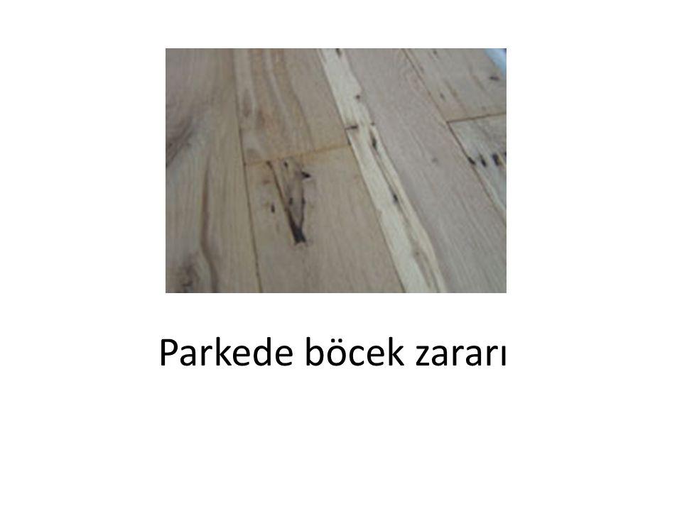 Parkede böcek zararı