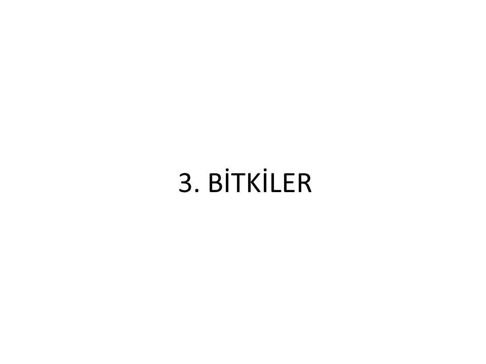 3. BİTKİLER