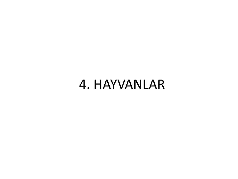 4. HAYVANLAR