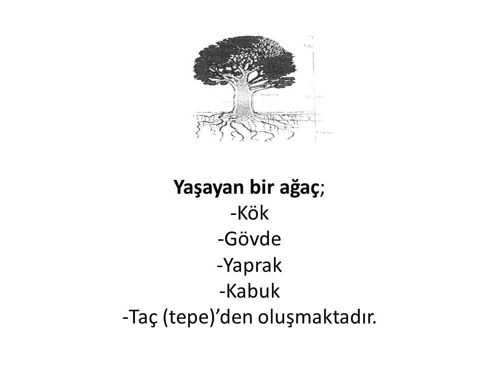 Yaşayan bir ağaç; -Kök -Gövde -Yaprak -Kabuk -Taç (tepe)'den oluşmaktadır.