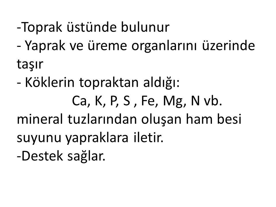 -Toprak üstünde bulunur - Yaprak ve üreme organlarını üzerinde taşır - Köklerin topraktan aldığı: Ca, K, P, S , Fe, Mg, N vb.