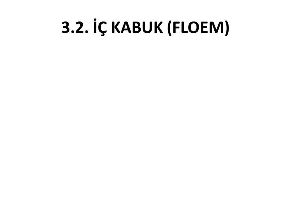 3.2. İÇ KABUK (FLOEM)