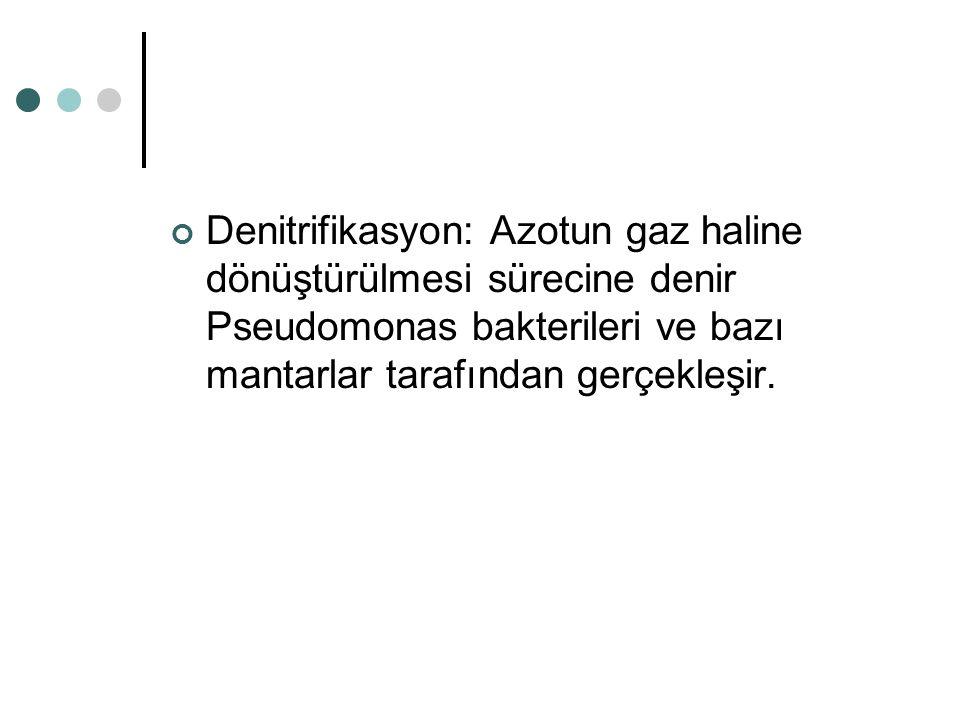 Denitrifikasyon: Azotun gaz haline dönüştürülmesi sürecine denir Pseudomonas bakterileri ve bazı mantarlar tarafından gerçekleşir.