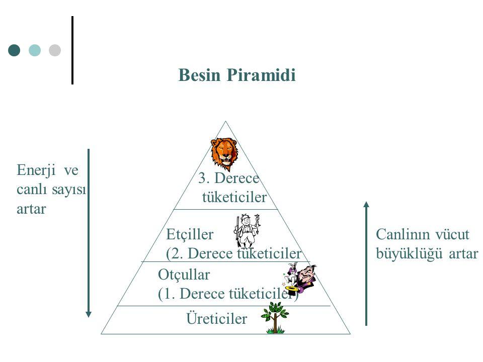 Besin Piramidi Üreticiler Otçullar (1. Derece tüketiciler) Etçiller