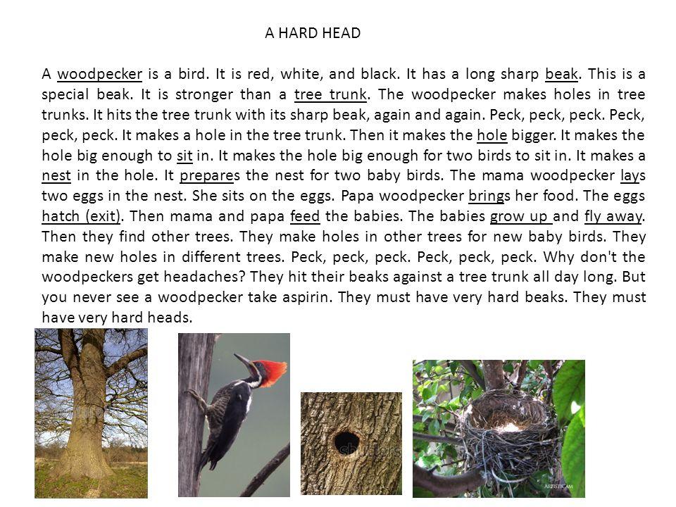 A HARD HEAD