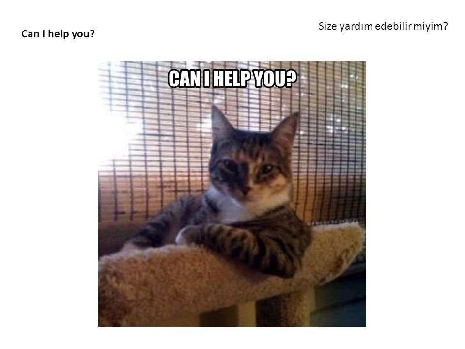 Size yardım edebilir miyim