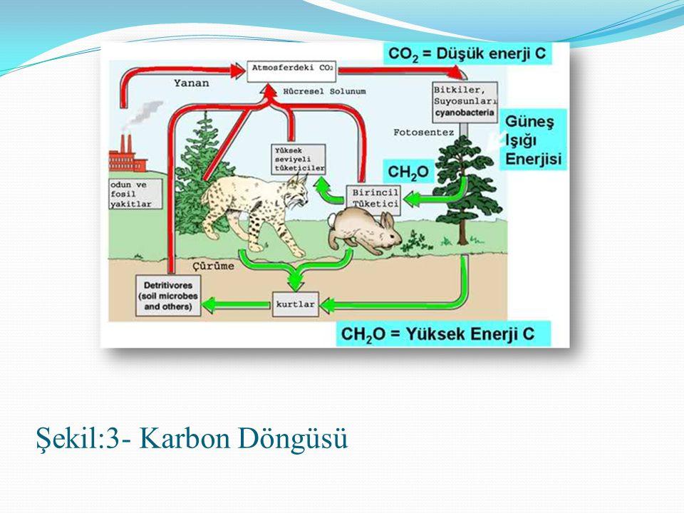 Şekil:3- Karbon Döngüsü