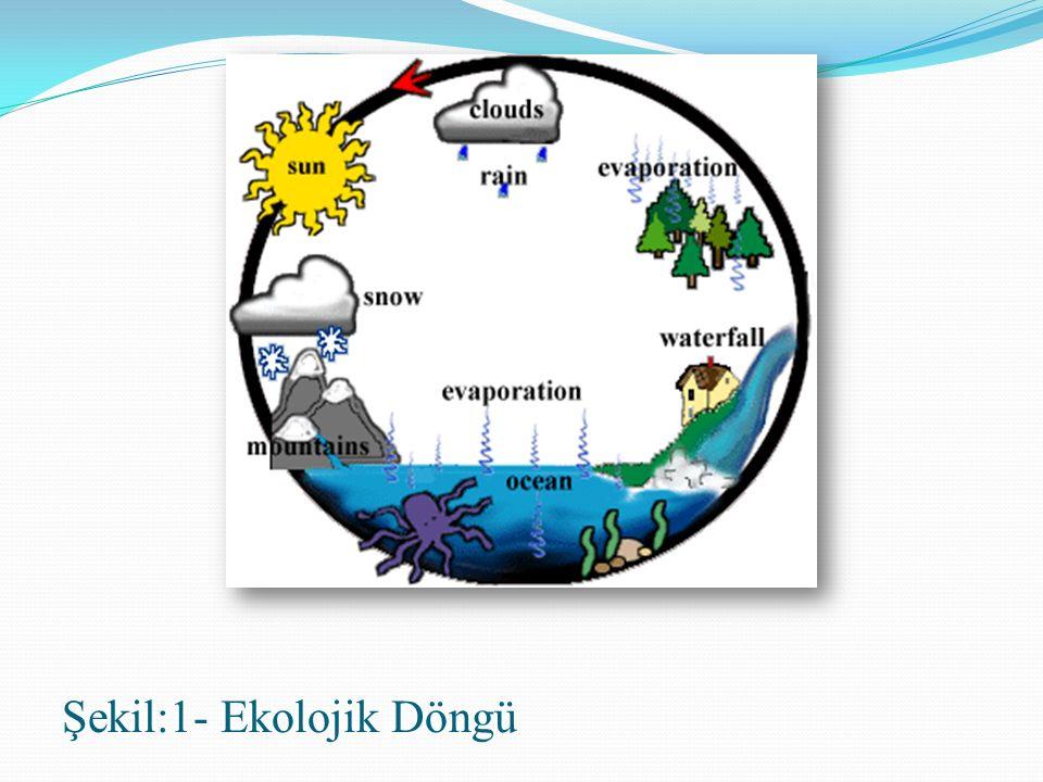 Şekil:1- Ekolojik Döngü