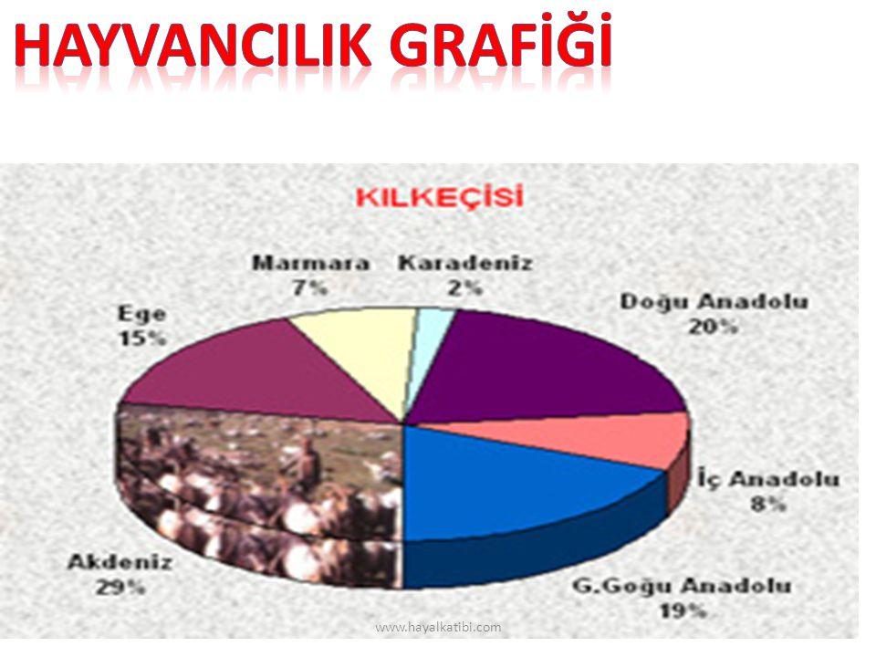 HAYVANCILIK GRAFİĞİ www.hayalkatibi.com