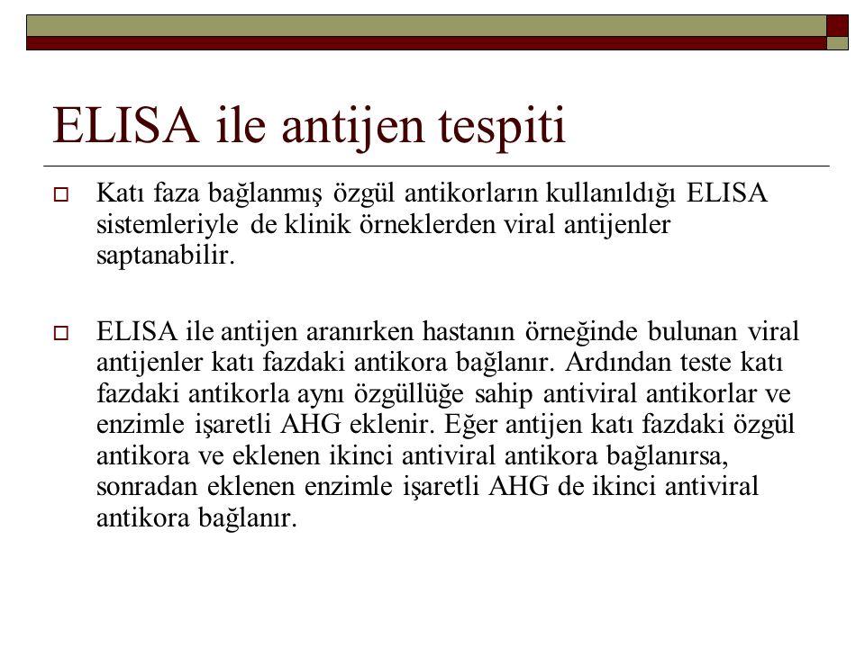 ELISA ile antijen tespiti