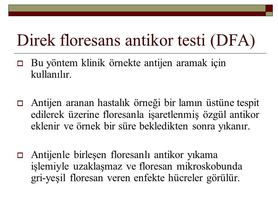 Direk floresans antikor testi (DFA)