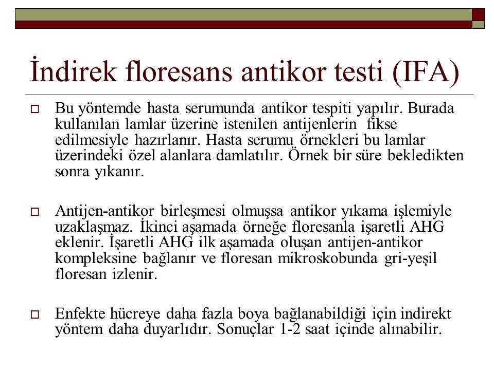 İndirek floresans antikor testi (IFA)