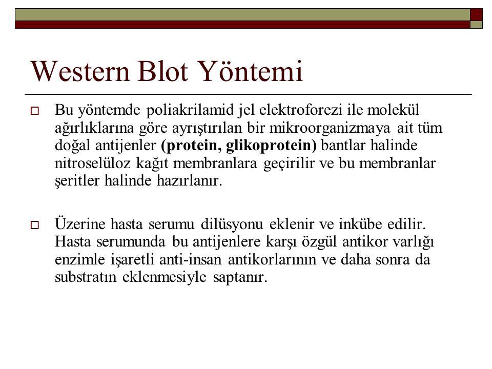 Western Blot Yöntemi