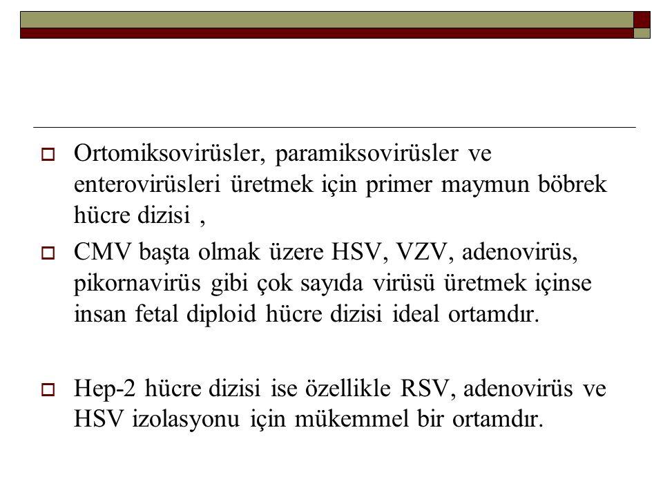Ortomiksovirüsler, paramiksovirüsler ve enterovirüsleri üretmek için primer maymun böbrek hücre dizisi ,