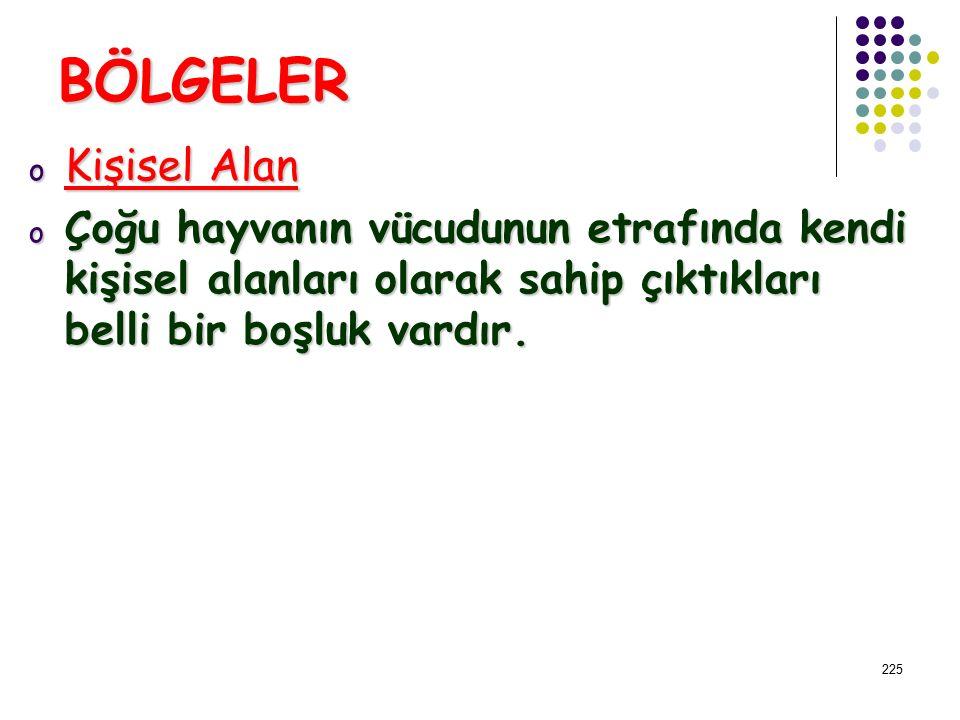 BÖLGELER Kişisel Alan.