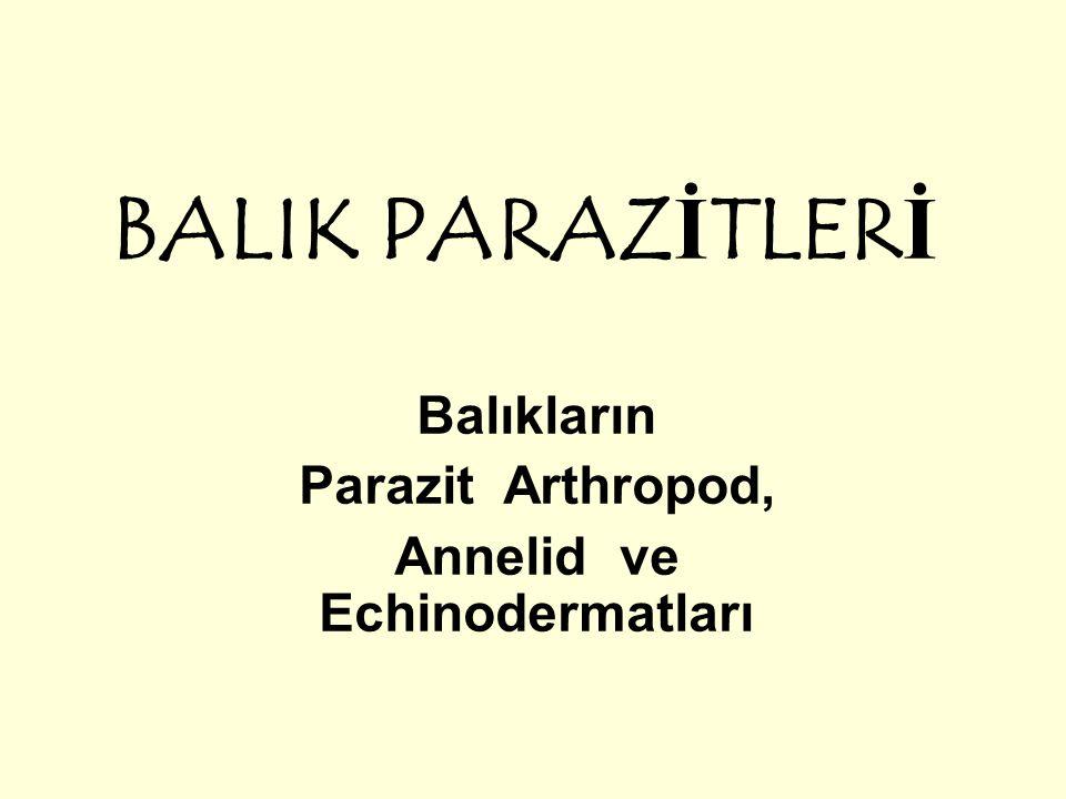 Balıkların Parazit Arthropod, Annelid ve Echinodermatları
