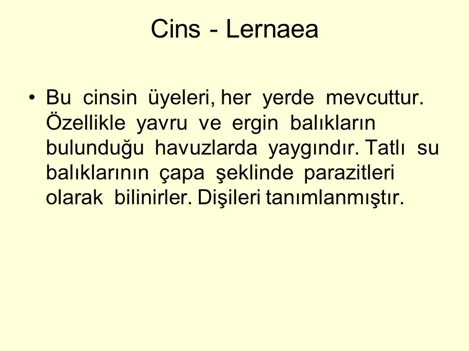 Cins - Lernaea