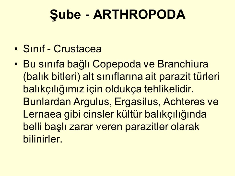 Şube - ARTHROPODA Sınıf - Crustacea