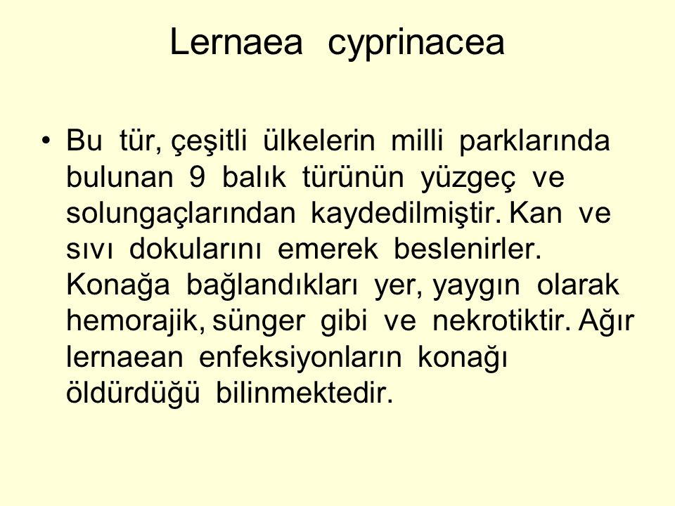 Lernaea cyprinacea