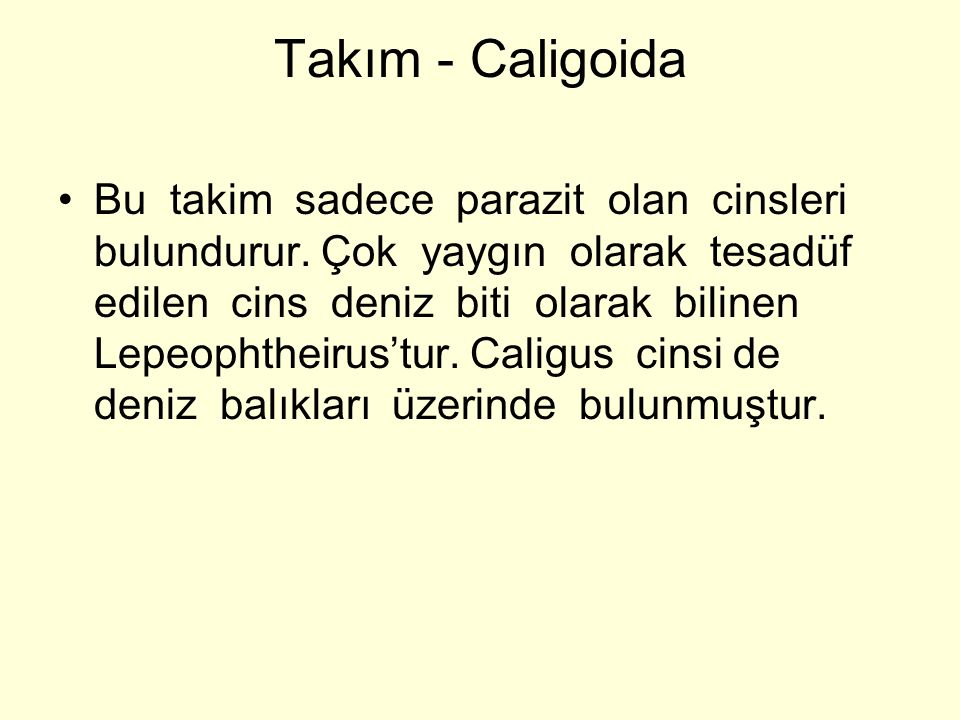 Takım - Caligoida