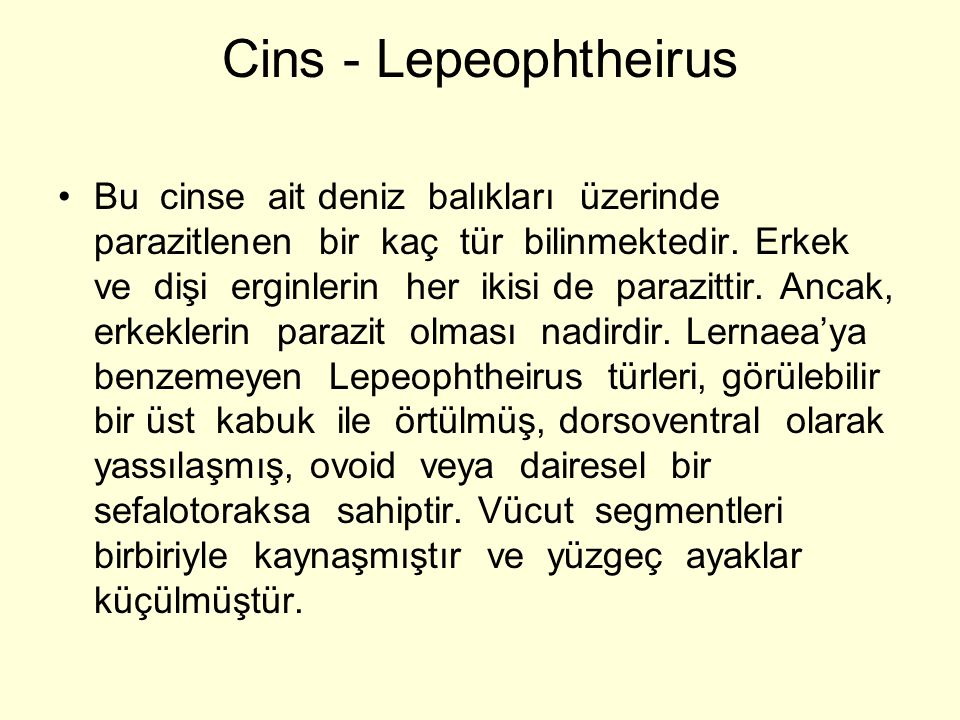 Cins - Lepeophtheirus