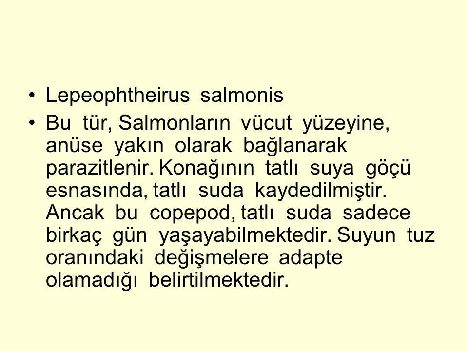 Lepeophtheirus salmonis