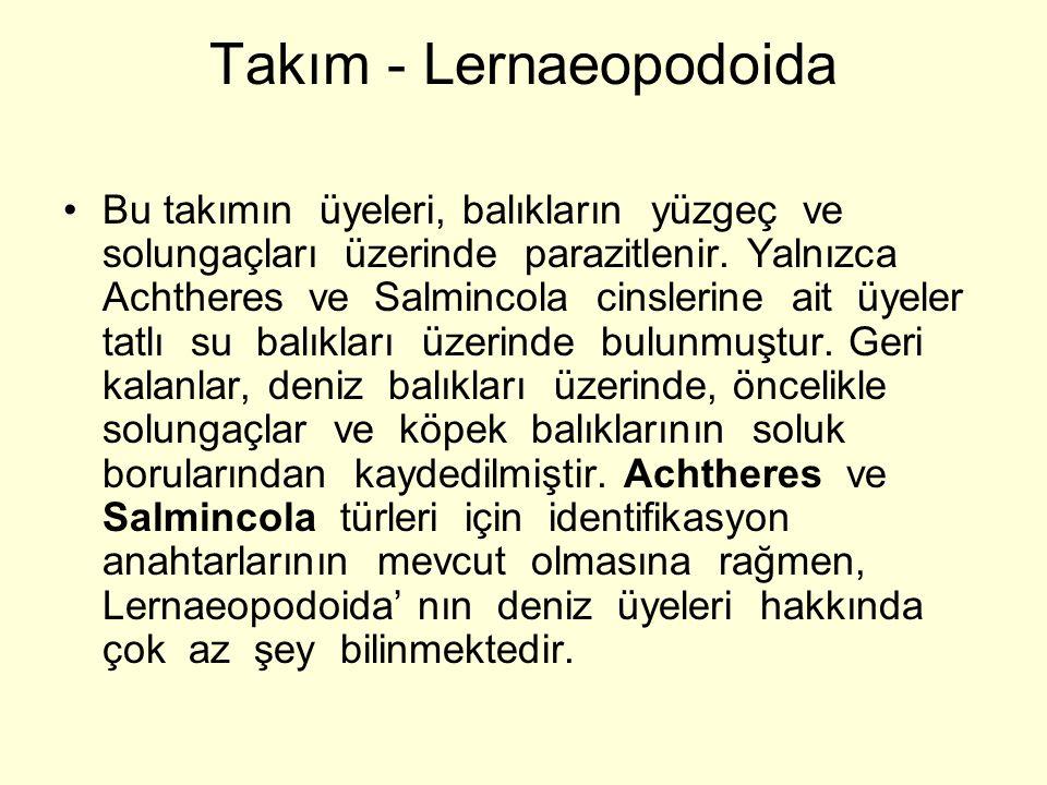 Takım - Lernaeopodoida