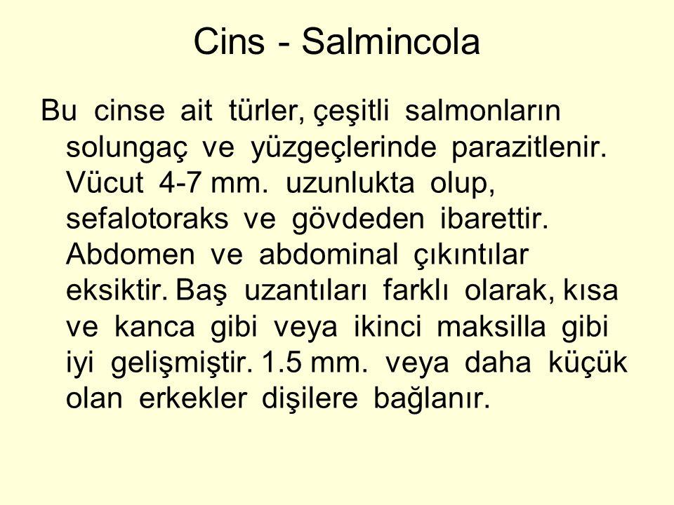Cins - Salmincola