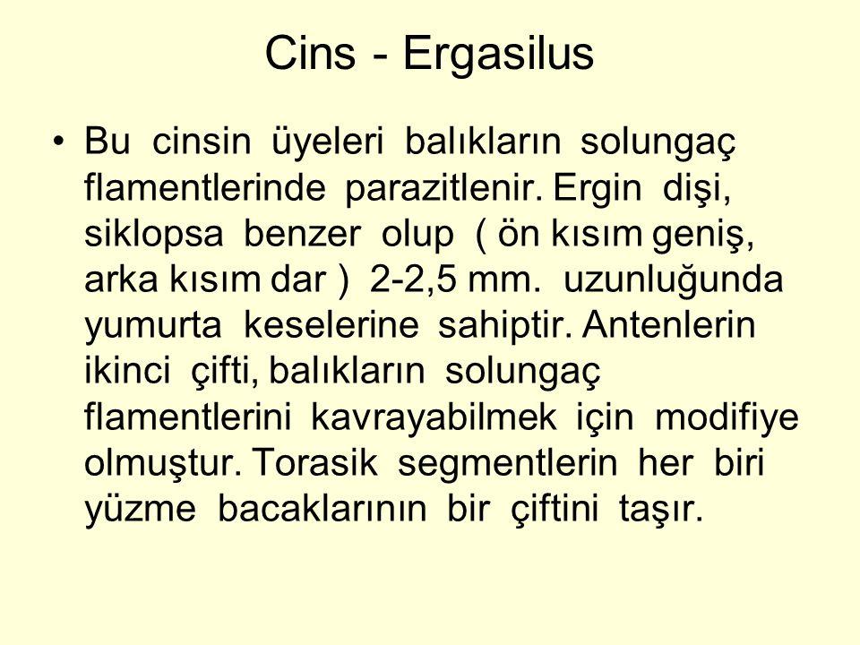 Cins - Ergasilus