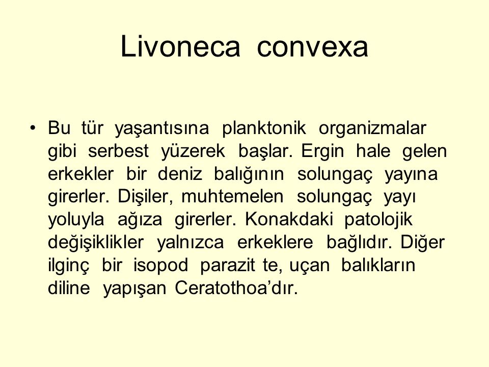 Livoneca convexa