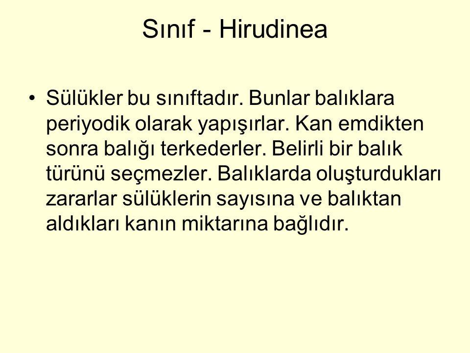 Sınıf - Hirudinea