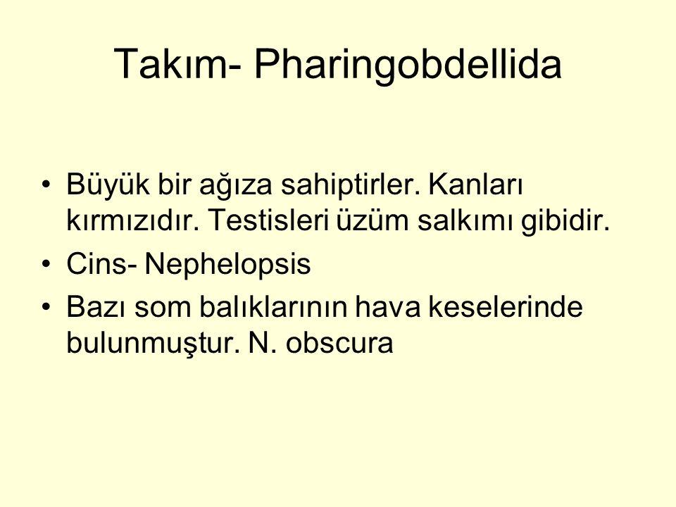 Takım- Pharingobdellida