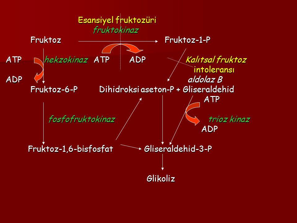 ATP hekzokinaz ATP ADP Kalıtsal fruktoz ADP aldolaz B