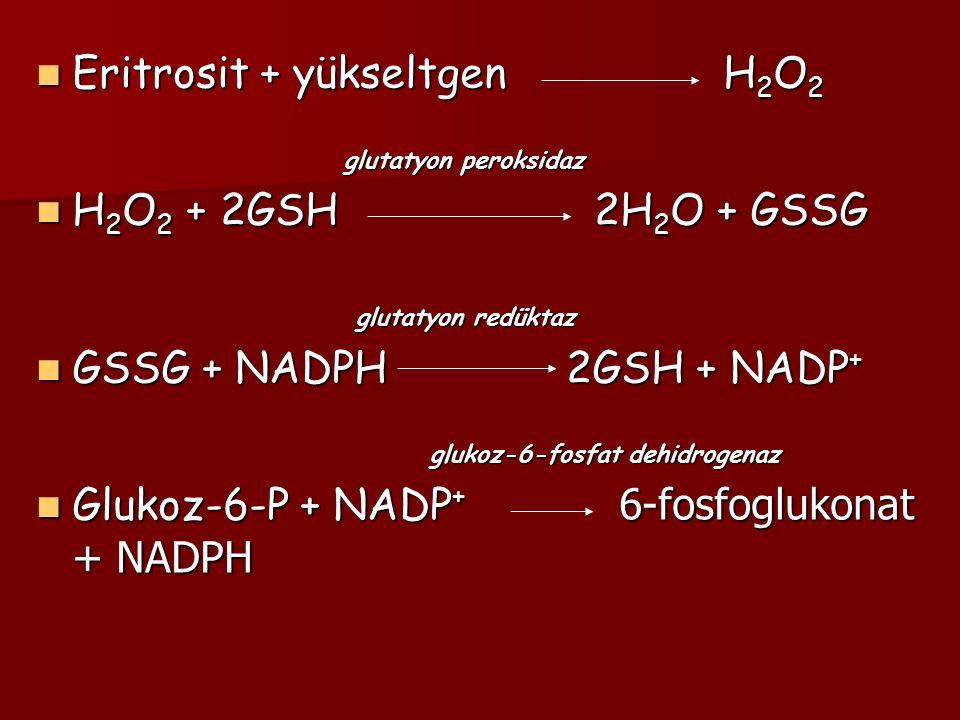 Eritrosit + yükseltgen H2O2