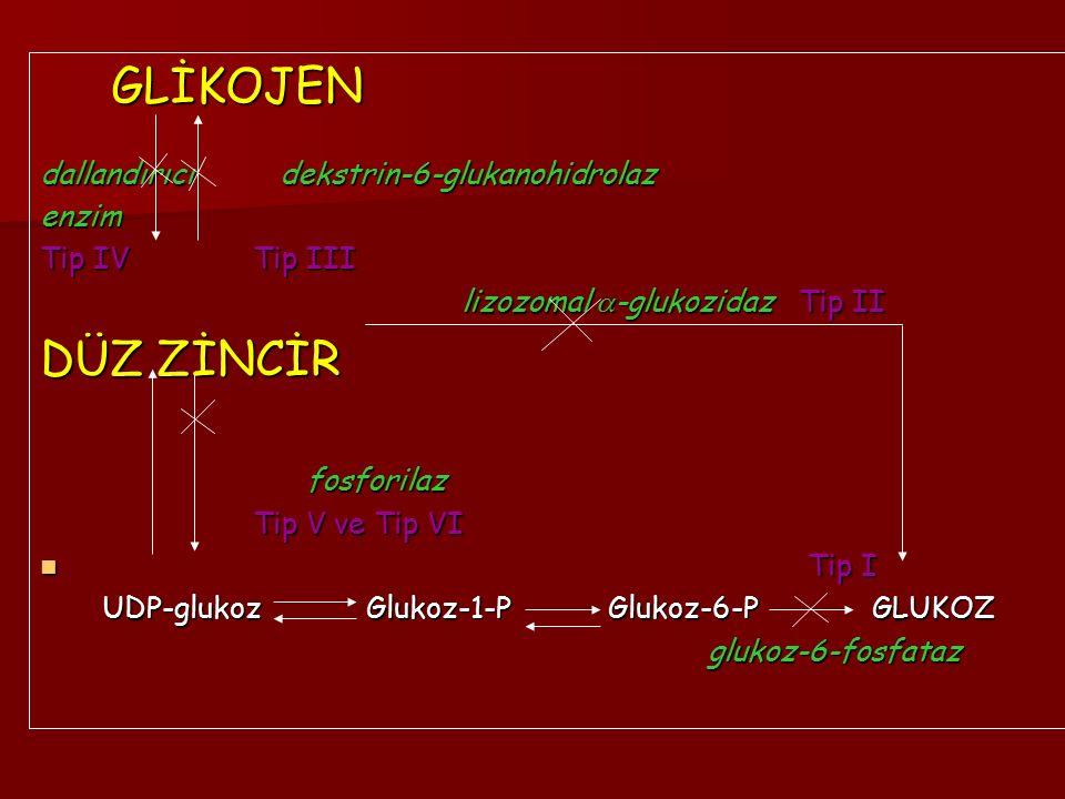 GLİKOJEN DÜZ ZİNCİR dallandırıcı dekstrin-6-glukanohidrolaz enzim